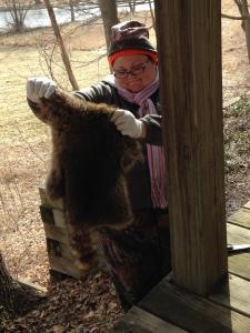 A freshly skinned raccoon fur