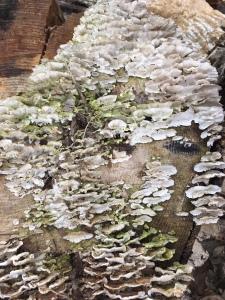 earth day fungus