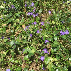 earth day periwinkle