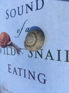earth day snail