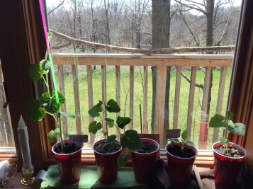 seedlings window